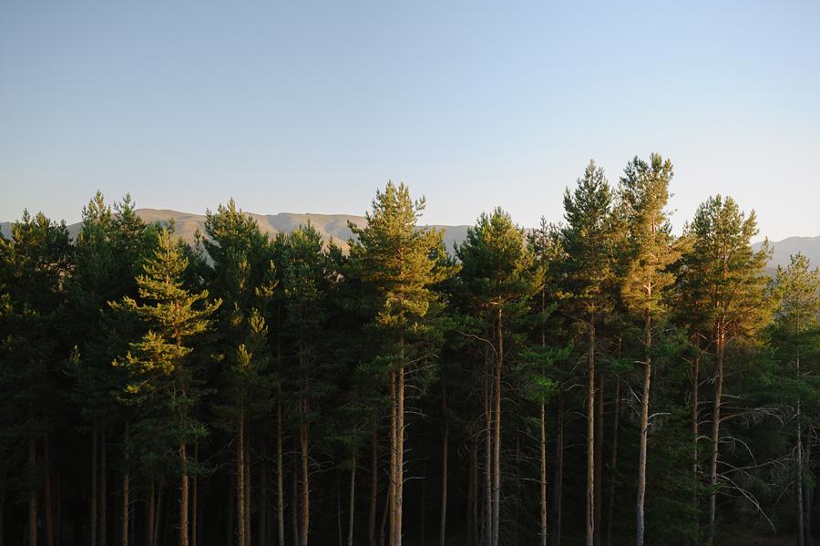 paisaje del bosque proximo al parador de gredos