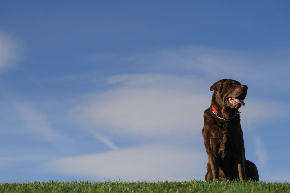fotografo de familia con perros en madrid