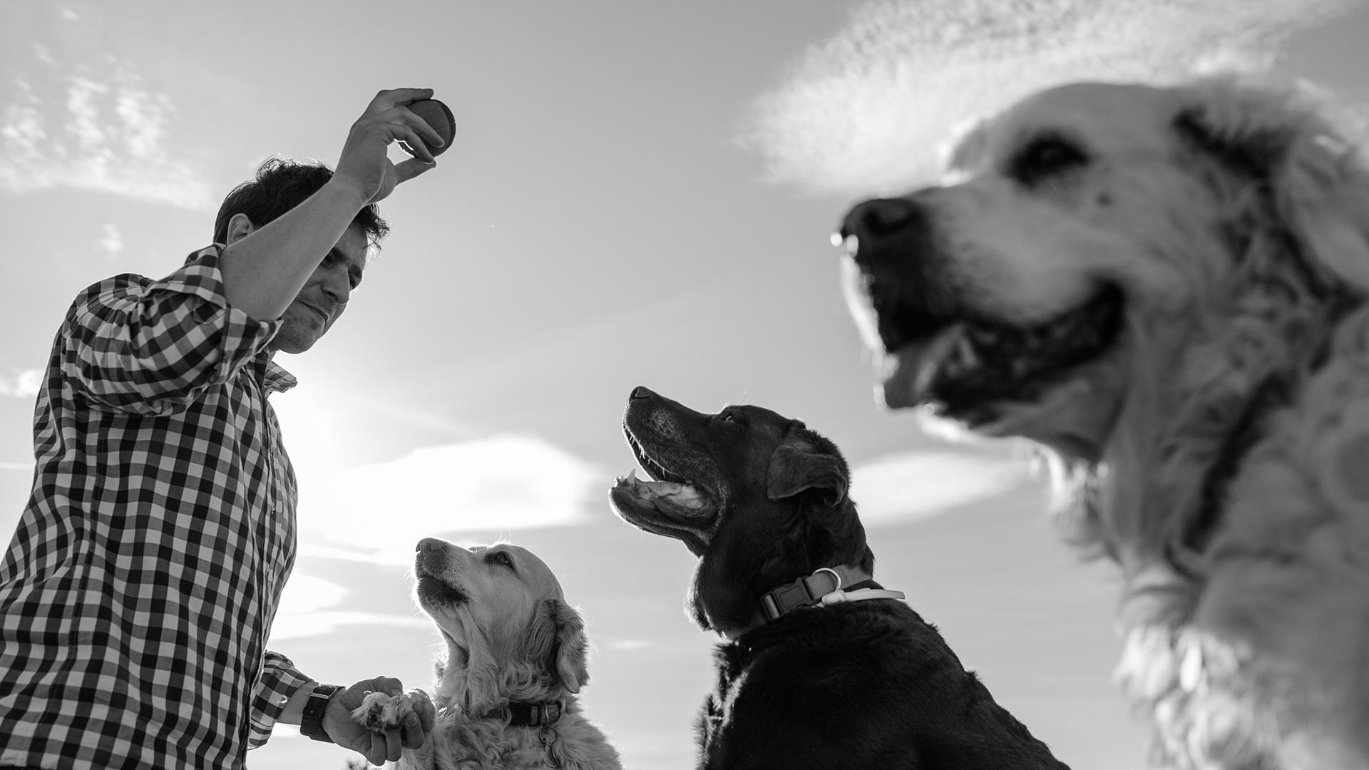 sesion-fotos-familia-perros-campo-las-naciones-madrid